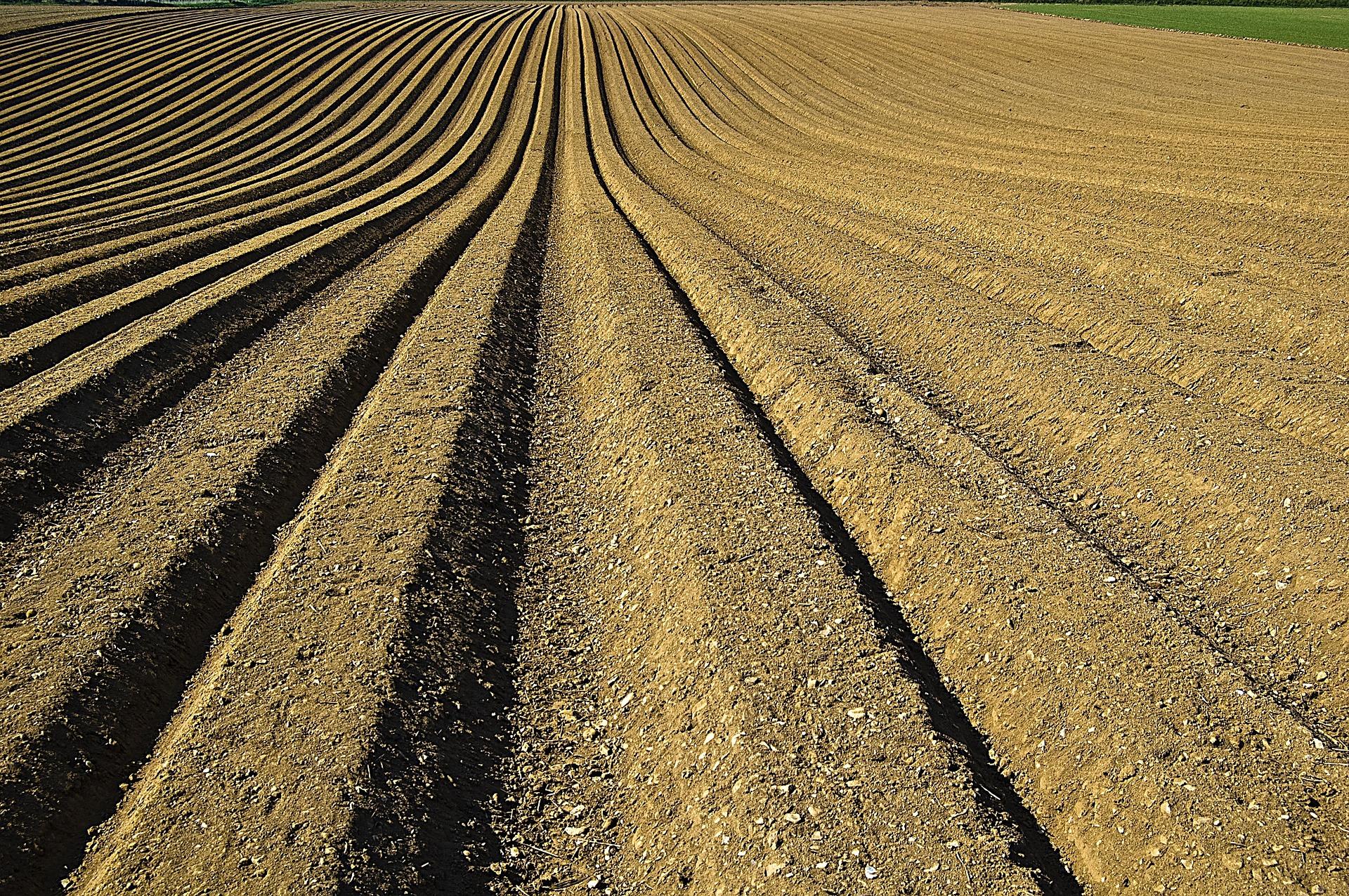 A farm plot tilled with fertilizer.