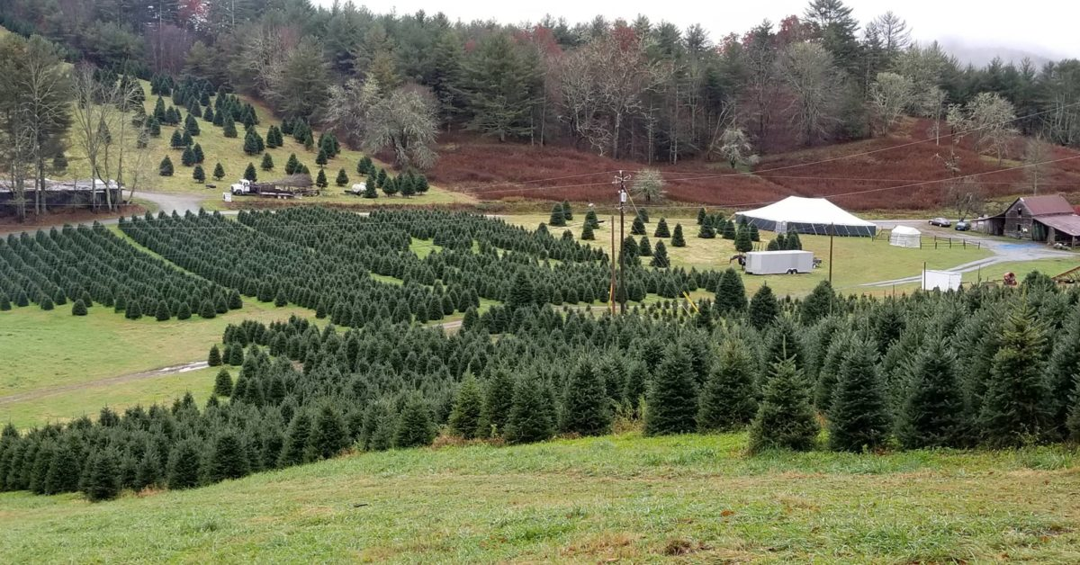 Tom Sawyer Christmas Tree Farm