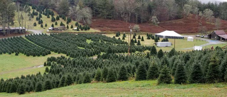 Christmas Tree Farm Pictures.Tom Sawyer S Christmas Tree Farm And Elf Village